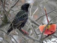 Krmljenje ptic pozimi in izdelava krmilnice za ptice